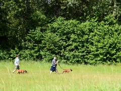Dog park gets boost from big-box retailers
