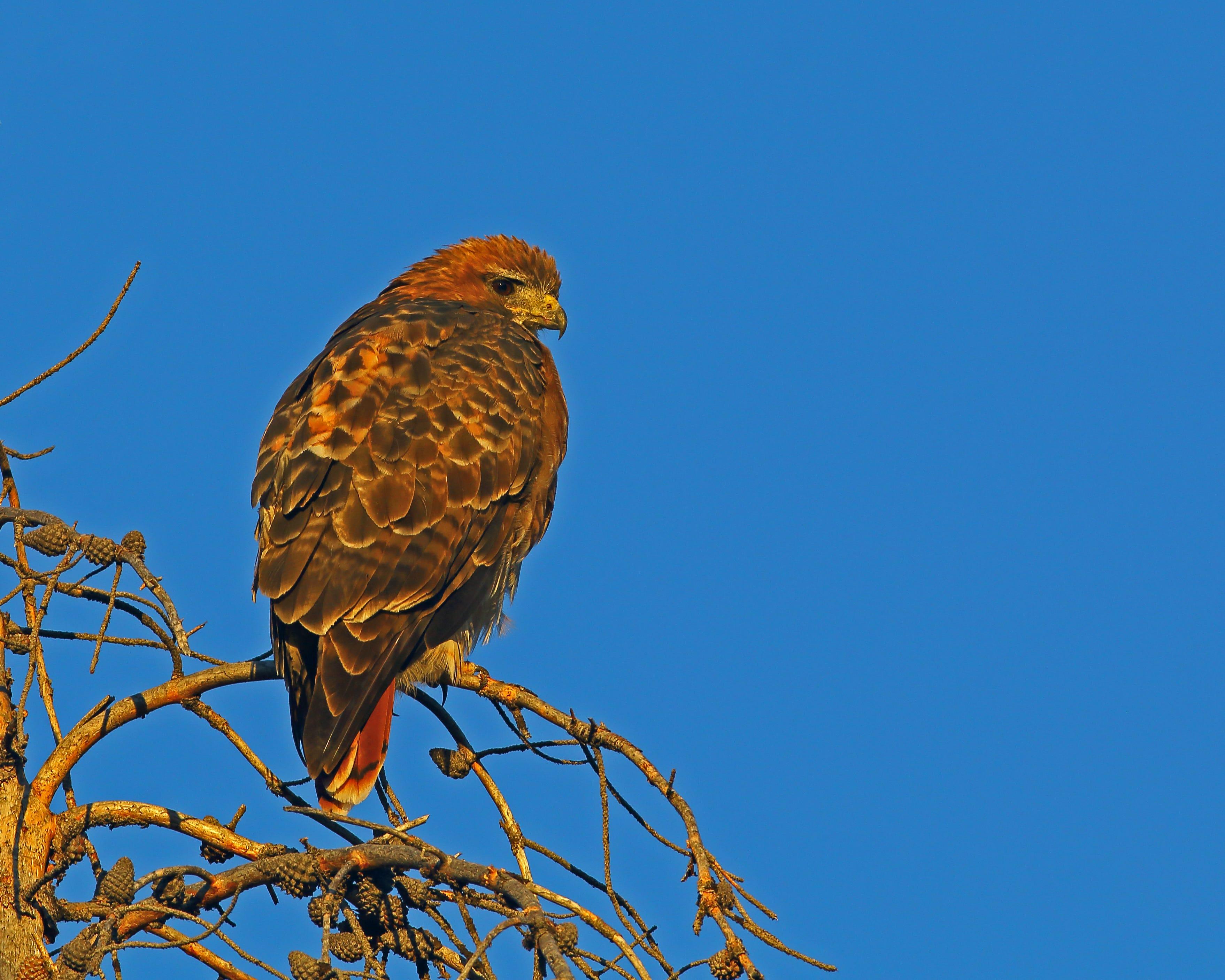 Red tail hawk resort casino free casino island to go full version