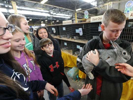 John Axtman, 13, holds onto to Chippy, a rabbit belonging to Lexi Gibo, far left, at the Pennsylvania Farm Show in Harrisburg.