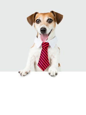 Companies such as Petco, Amazon and Bank of America allow employees to bring their dogs to work.