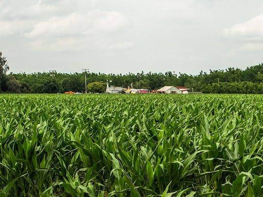 farm-in-hanford-california-san-joaquin-valley1.jpg