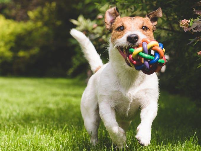 Image result for dog pet