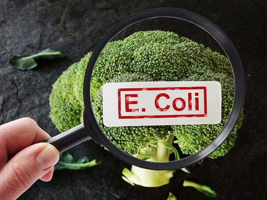 Symptoms of E. coli vary.