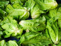 Romaine lettuce warning: CDC says E. coli outbreak has sickened 32 people in 11 states