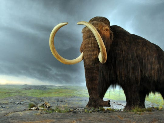 An artist's rendering of a mammoth whose remains were unearthed in Michigan in 2015. The mammoth was believed to have died between 11,700 and 15,000 years ago.