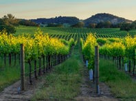 14. Wineries   • Employment growth 2008-2017:  59.9%   • Employment total:  64,212   • Wage growth 2008-2017:  10.7%   • Avg. annual wage:  $44,788   The number of wineries in the United States rose from 2,311 in 2008 to 4,343 in 2017, nearly the highest rate of establishment expansion of any industry. Over the same period, the number of winery workers rose by 59.9%, far more than the national employment growth rate across all industries of 5.4%.   Growth in the wine industry was driven in part by strong demand from the millennial generation. The youngest members of this generation -- those born between 1981 and 1996 -- reached the legal drinking age last year, and, according to research from industry association the Wine Market Council, a large share favor wine. According to the WMC, millennials drink an average of 3.1 glasses of wine per occasion, compared to 2.4 glasses for gen-Xers and 1.9 for baby boomers. Millennials account for 42% of U.S. wine consumption, the largest share of any age cohort.   ALSO READ: Least Fashionable Cities in America