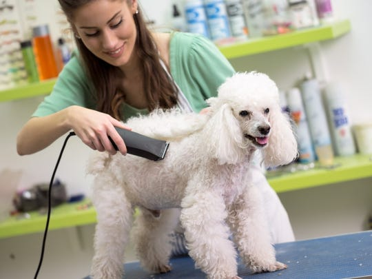 Health care for pets can cost tens of thousands of dollars, leaving you wondering how to cover the costs.