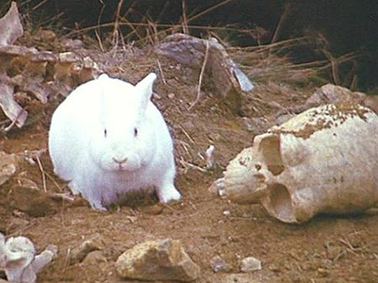 "The Rabbit of Caerbannog, which appears in the film ""Monty Python and the Holy Grail,"" is a natural-born killer who dispatches several of King Arthur's knights with ease before being killed by the Holy Hand Grenade of Antioch."