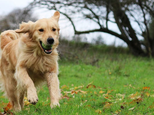 Pet insurance policies typically reimburse 70% to 90% of covered costs related to illness and injury.