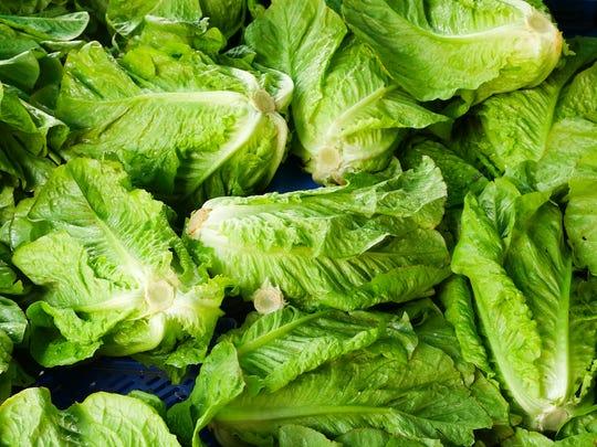 File: Romaine lettuce