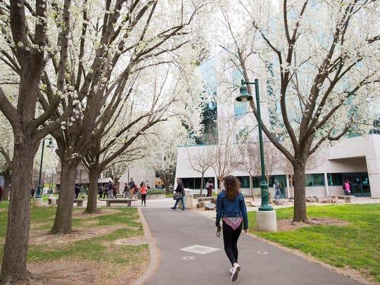 At Cal State University-Sacramento, Hispanics make up 33% of the student body.
