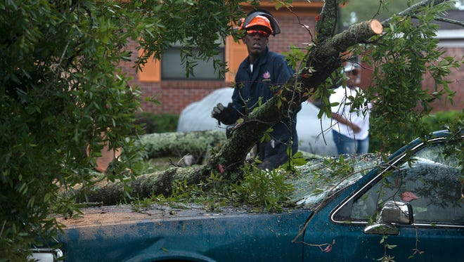 City of Pensacola Park and Recreation workers remove a downed tree near the intersection of Blount and B Street Tuesday morning Oct. 27, 2015. Widespread rain, thunderstorms, and high wind toppled several trees in the metro area causing power, and utility outages Monday