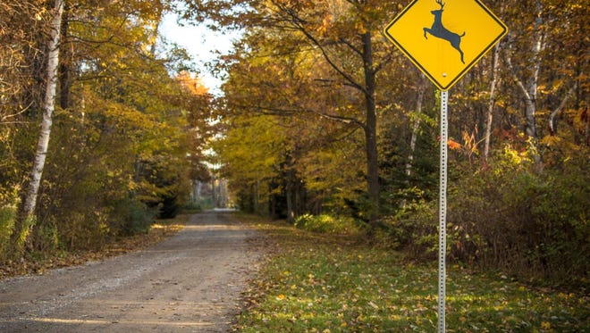 Deer vs. vehicle crashes rise as breeding season - known as the rut - takes place in fall.