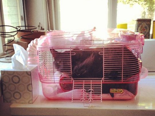 So far, Wolfie has made for a terrible hamster replacement.