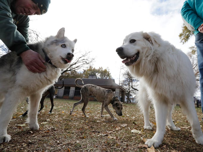 Dogs play at the City of Green Bay's first dog exercise