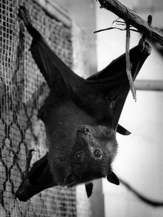 Ding the bat