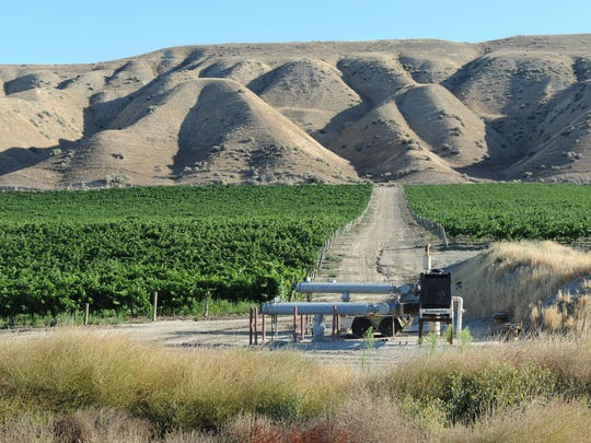 A vineyard stands out against the hills near Paso Robles, California.