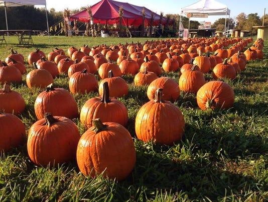 636112200890939138-Pumpkins-Renfrew-Pumpkin-Fest.jpg