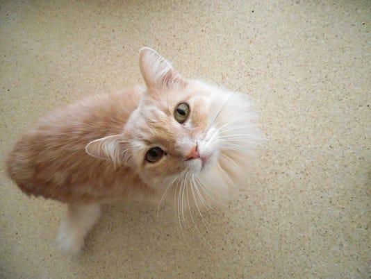 Pets-ACAWL-011517.jpg