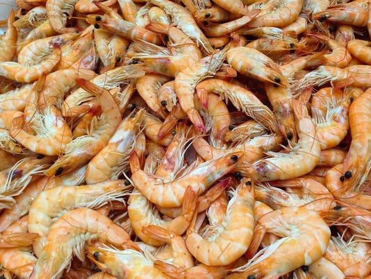 WSF 0519 shrimp-727214-1920.jpg