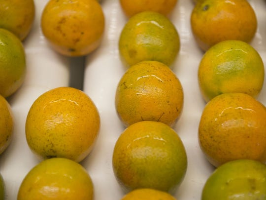 Valencia oranges grown in St. Lucie, Polk and Highlands