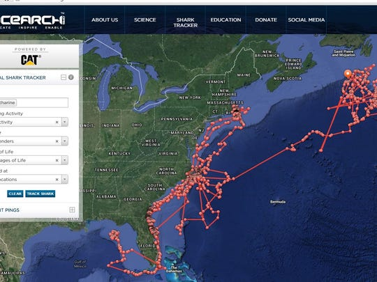 Here's where Katharine the great white shark has been