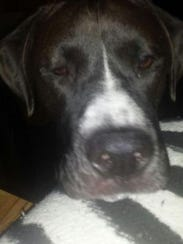 Rolo perished in his owner's truck when it broke through