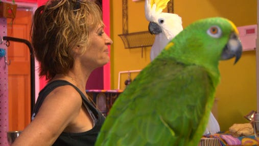 """Chari Davis, the """"Irmo Bird Whisperer,"""" takes in unwanted and orphaned parrots."""
