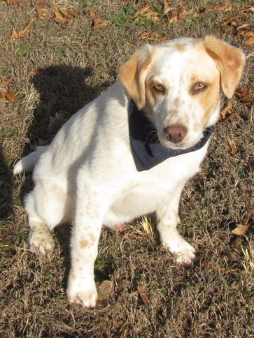 Saltine is a wonderful 8-month-old puppy who is up
