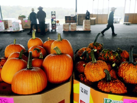 Henry Stoltzfus hired a truck driver to bring his bins of pumpkins from his Holtwood farm to the auction Friday. The longer trip caused by the closure of the Norman Wood Bridge will cost him extra in hauling charges.