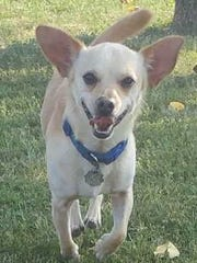 Drago is an adorable 2½-year-old, 10-pound, neutered,
