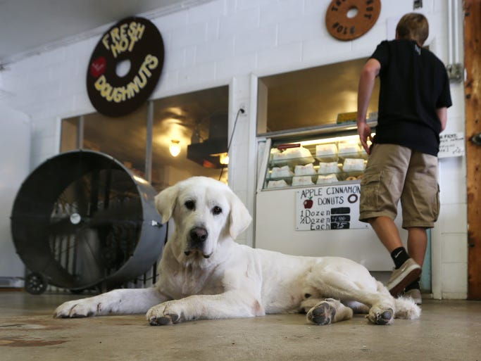 To get to the fresh apple cinnamon donuts at Jacob's Family Orchard you may have to step over or around Razor, the friendly shop dog. The orchard, just west of Mt. Summit Ind., has been known at Jacob's since 2002 but the history of the orchard dates back  80 years. The family currently has 45 acres of apples, 25 acres of pumpkins and 10 acres of produce.