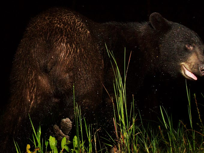 News-Press photographer Andrew West has a camera trap
