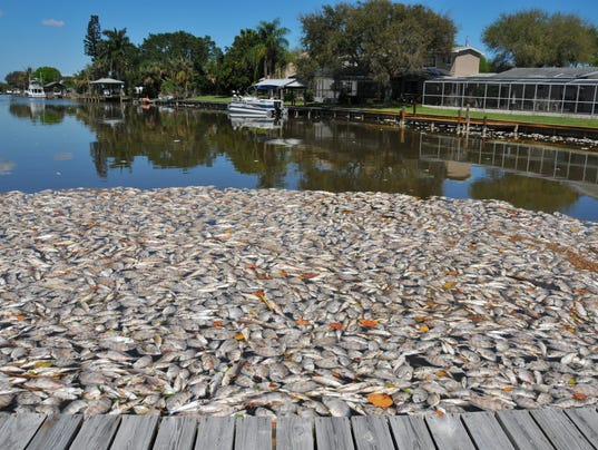 Bill sargent indian river lagoon is a paradise lost for Indian river florida fishing