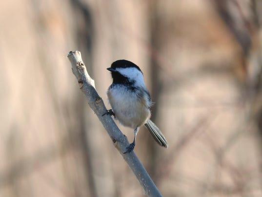 2_bird count--secondary