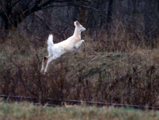042518-JUMPING-WHITE-DEER.jpg