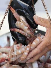Steve Fabian weighs jumbo shrimp from the Fabian Seafood
