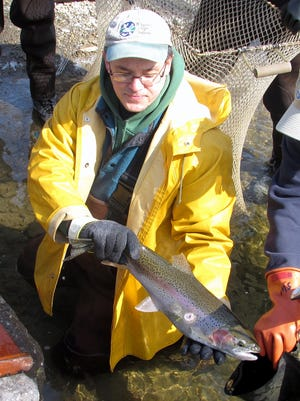 State Department of Environmental Conservation fish biologist Brad Hammers shows off a rainbow trout sporting a lamprey eel scar during Monday's trout shocking on Catharine Creek near Montour Falls.