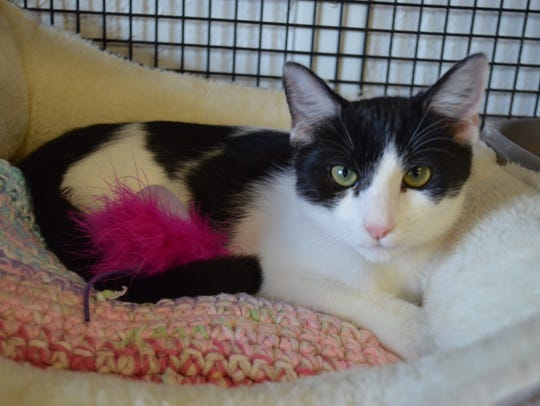 Teara is available for adoption with Sun Cities 4 Paws at