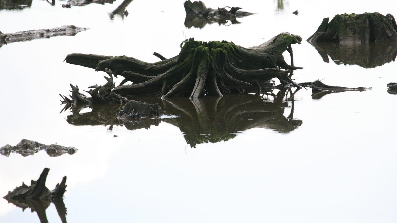 Low tide reveals Meadowlands forgotten forest