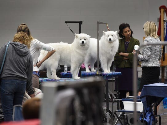 Dogs stand on grooming tables Saturday, Dec. 16, during