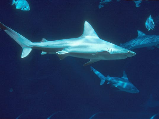 Sharks Trigger Florida Beach Closures