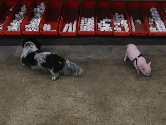Clifford the dog (left) and Moonshyne play in the shop