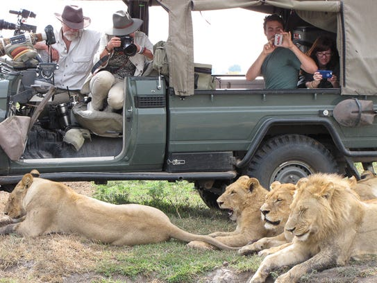 reporters with lions