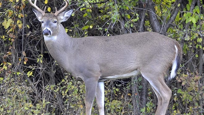 Plans are being detailed for Ann Arbor's expanded 2018 deer hunt as part of the city's ongoing deer management efforts.