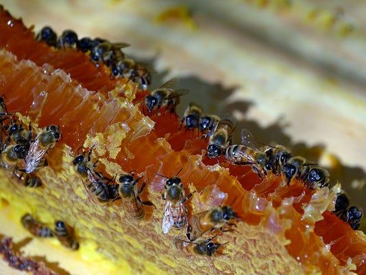 636349743831160725-my-bees.JPG