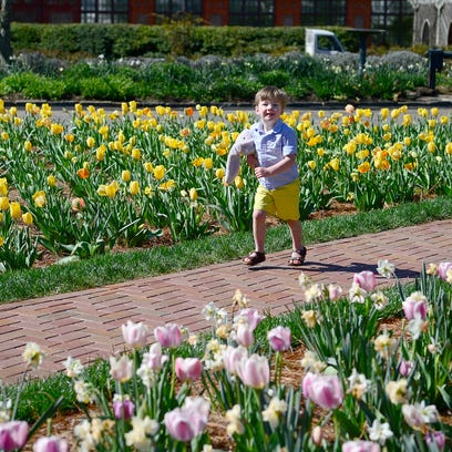 Biltmore Blooms explodes with tons of tulips, 'Titanic' costumes, more