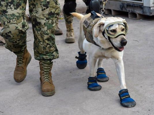 MEXICO-QUAKE-RESCUE-DOG-FRIDA