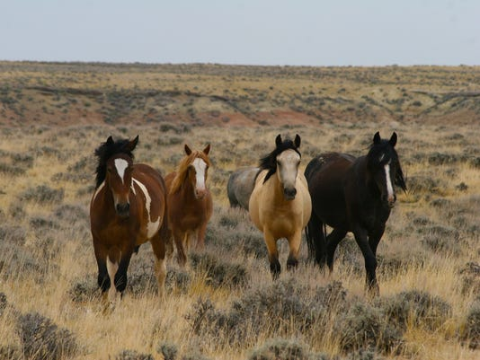 636355570816682708-wyo-wild-mustangs-mccullough-WY-equitrekking.jpg
