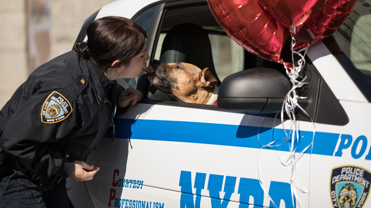 Orson was rescued from a dog-fighting ring and has been waiting over a year to find a home. The NYPD decided to help.
